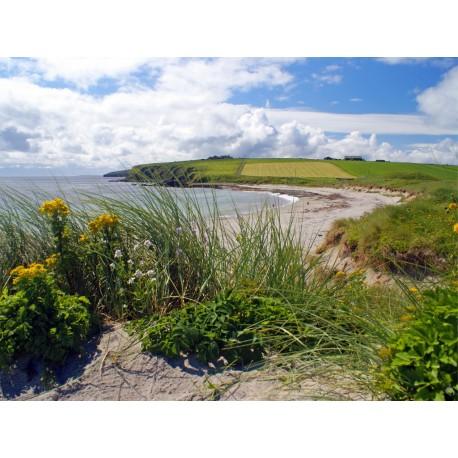 Orkney Card - Dingieshowe Beach