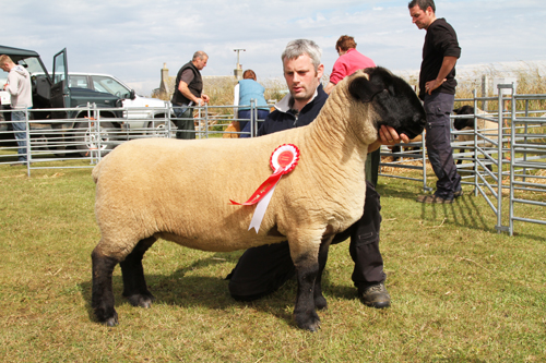 Last year's Sanday show Champion of the Yard was homebred Suffolk ewe, Killer Queen, pictured with owner Malcolm Lennie of Seaview farm.
