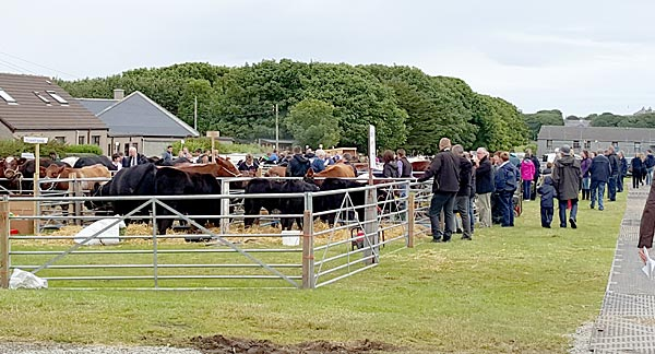 Visitors and exhibitors aat the County Show this morning.
