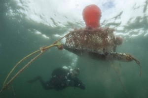 Ghost fishing gear in Scapa Flow photographed by diver Peter Verhoog.