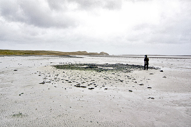 Prof Jane Downes examines one of the house structures revealed on the beach. Other houses represented by dark spreads of stone can be seen in the background, extending as far as the last visible sand dune. (Picture: Colin Richards)