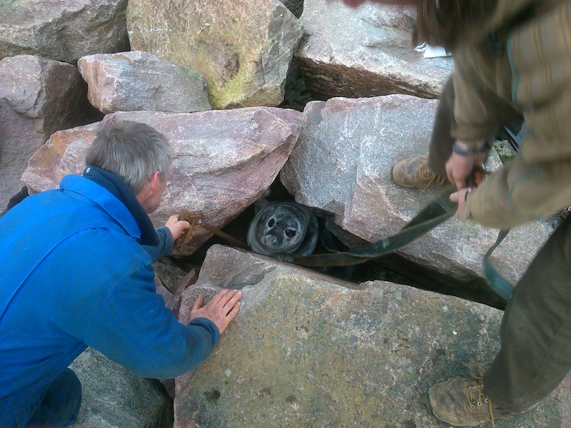 Sanday Seal Rescue