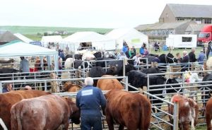 East Mainland Show cancelled for 2021