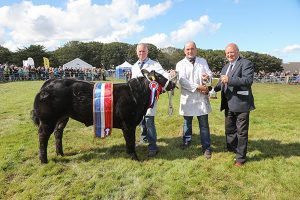 Sebay Farm stot tops County Show's cattle section
