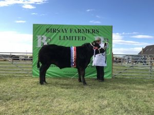 Upper Onston stot claims Dounby cattle title