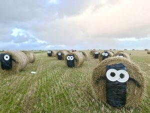 Local young farmers make it through to 'bale art' finals