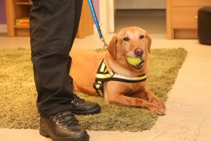 Variety concert to aid drugs dog charity