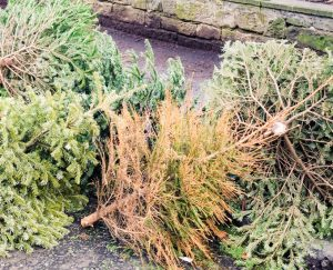 Christmas tree collection reminder
