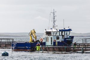 Autumn opening for new Scapa Flow sea farm