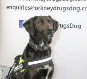 Zoe the drugs dog is ready to sniff out crime