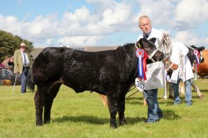 Ready, Set, Show! – Sebay Farm stot and Upper Cornquoy ewe secure the public vote