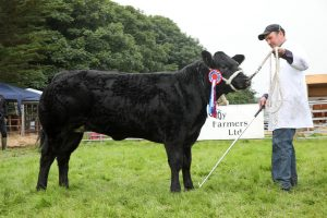 2019 County Show cattle champion